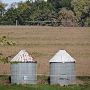 Nebraska cornfields.